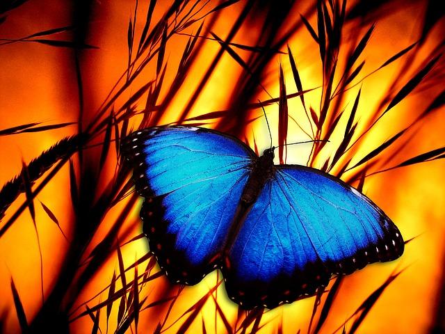 butterfly-370937_640