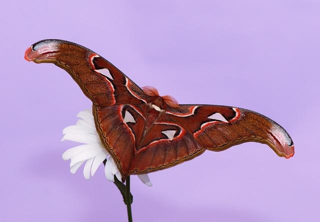 butterfly-563419_640