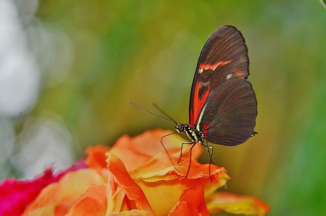 butterfly-611183_640