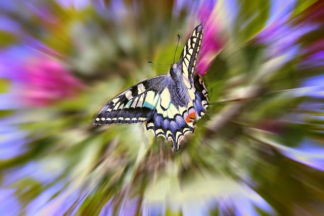 butterfly-789837_640