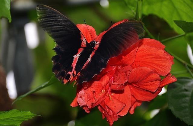 butterfly-329064_640