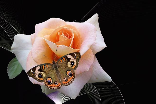 flower-2021167_640