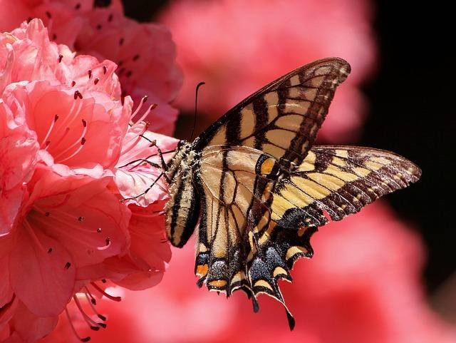butterfly-108616_640