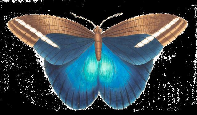 butterfly-1525822_640