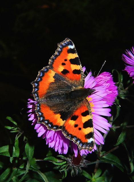 butterfly-464076_640
