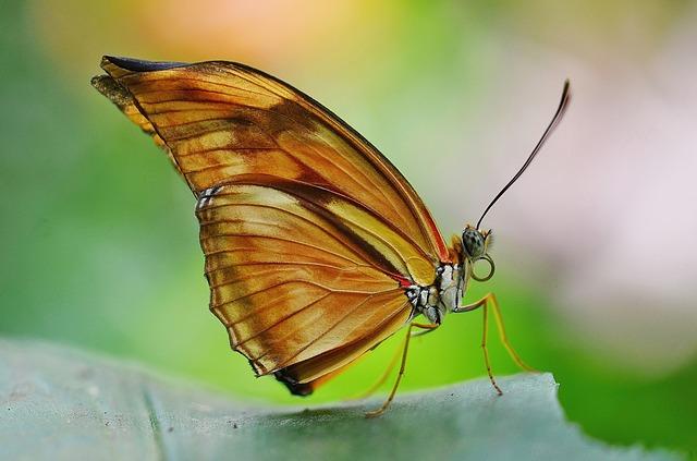 butterfly-608586_640