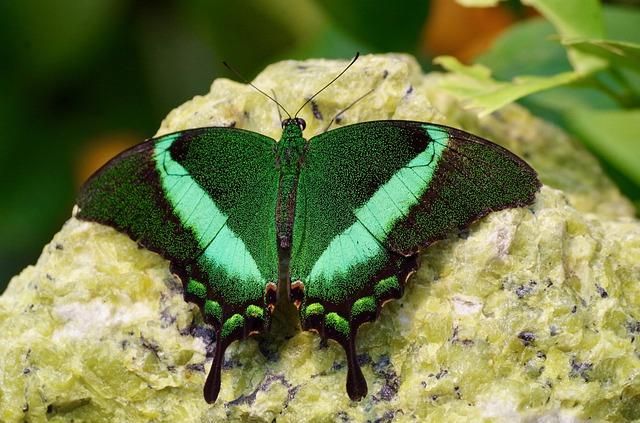 butterfly-2034124_640