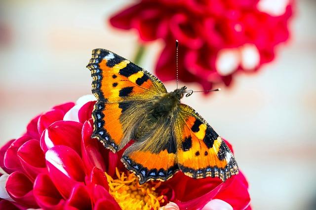 butterfly-1634040_640