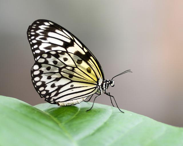 butterfly-2435604_640