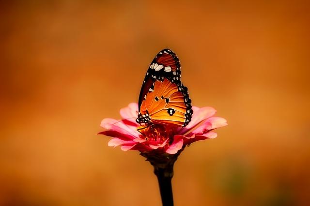 butterfly-2656624_640