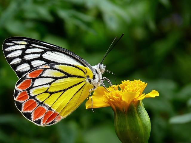 butterfly-85628_640