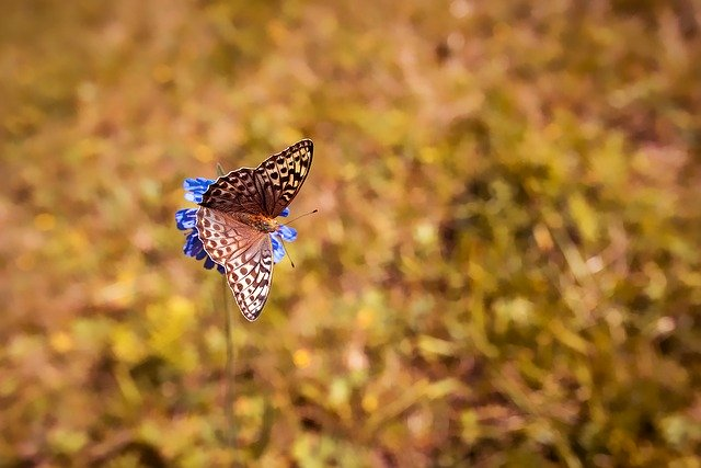 butterfly-1698965_640